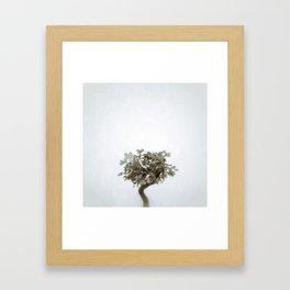 Tree #04 Framed Art Print