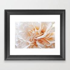 Old Style Rose Flower 3464 Framed Art Print