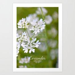 Coriander in flowers VI Art Print