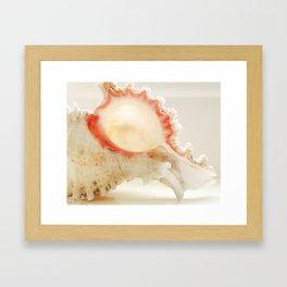 Murex Shell Framed Art Print