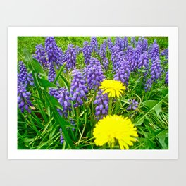 Field of Flowers, Dandelions and Bluebonnets Art Print