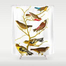 Lazuli Finch, Crimson-necked Bull-Finch, Gray-crowned Linnet, Cow-pen Bird, Evening Grosbeak, Brown Shower Curtain