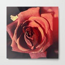 Vintage Rose023 Metal Print