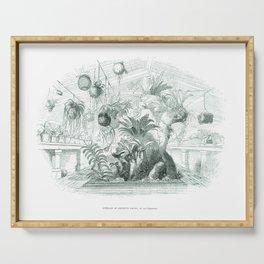 Vintage Botanical illustration, 1837 (Greenhouse) Serving Tray