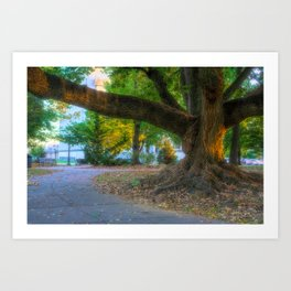 Allentown West Park Path And Tree Art Print