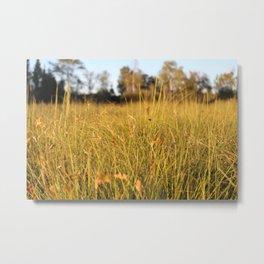 grassy field sunset Metal Print
