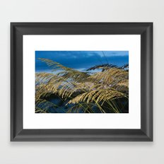 Sea Oats Framed Art Print
