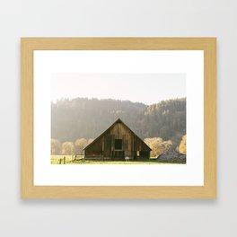 Solo Sheep. Framed Art Print