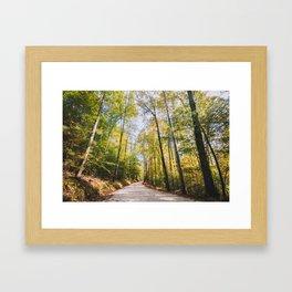 Forest Road - Muir Valley, Kentucky Framed Art Print