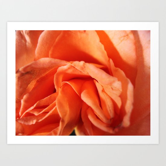 Rosa Vieja Art Print