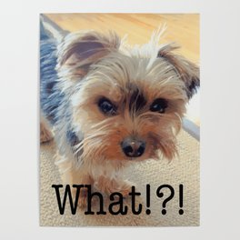 Yorkie | Dogs | Terrier | Pets | Humor | What!?! (with text) Poster
