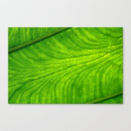 Leaf Paths Canvas Print