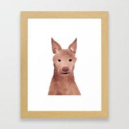 Australian Kelpie Framed Art Print