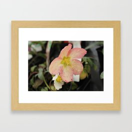 Beauty Part 2 Framed Art Print