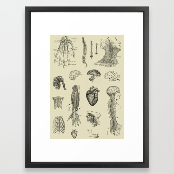 Vintage Anatomy Print Framed Art Print By Stilleskyggerart Society6