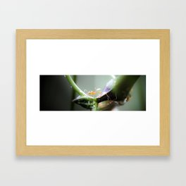 Fire Ants Framed Art Print