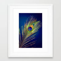 peacock feather Framed Art Prints featuring peacock feather by mark ashkenazi