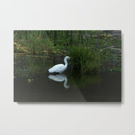 Snowy Egret in a Lake Metal Print