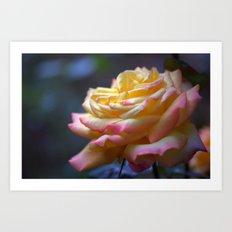 Beautiful Rose 1424 Art Print