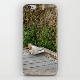 The courious cat iPhone Skin