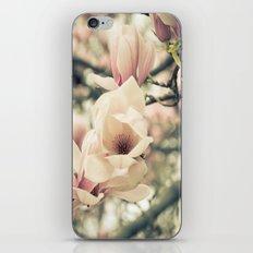 Magnolia Tree Bloom.  Flower Photography iPhone & iPod Skin