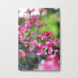 Pink Dogwood in the Spring Metal Print