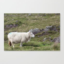 No need to be sheepish about it Canvas Print