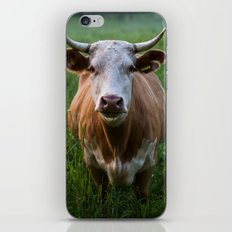 COW - FIELD - GREEN - VALLEY - NATURE - PHOTOGRAPHY - LANDSCAPE iPhone & iPod Skin