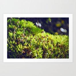 The small wild Art Print