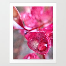 Ruby Leaves in Rain Art Print