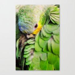 Sheepish bird - Parrot Canvas Print