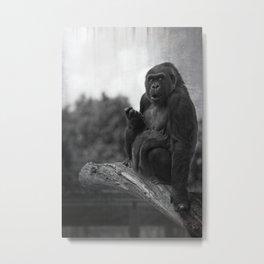 Asante The Western Lowland Gorilla Metal Print