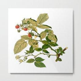 Berries berry food fruit herbal Metal Print