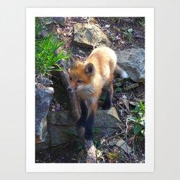 fox 2018-2 Art Print