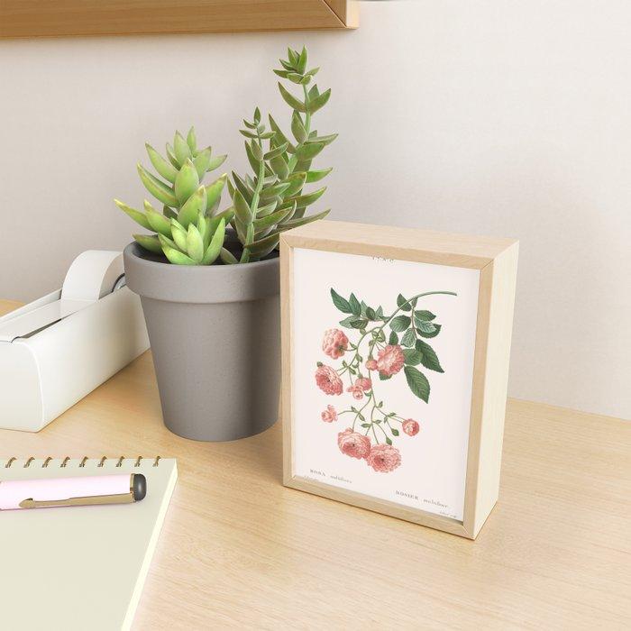 Rosa Multiflora Framed Mini Art Print