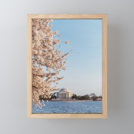 Jefferson Memorial and cherry blossoms Framed Mini Art Print