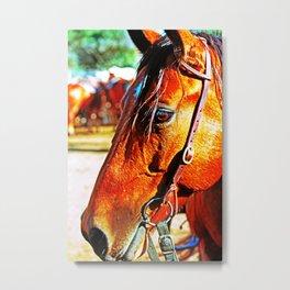 Horse-1-Color Metal Print