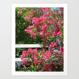 Sonoma Flowers Art Print