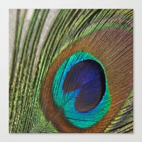 peacock feather Canvas Prints featuring Peacock Feather by aquenne