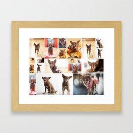Chloe Obsession Framed Art Print