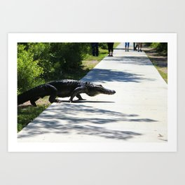 Carolina Gator Crossing 1 Art Print