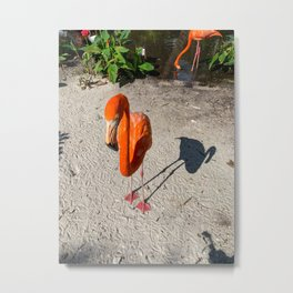 A flamingo and his shadow Metal Print