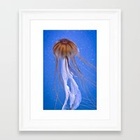 jelly fish Framed Art Prints featuring Jelly fish by Cozmic Photos