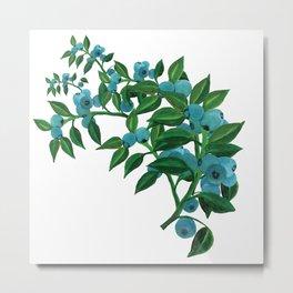 Blueberry Branch Illustration Metal Print