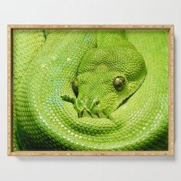 Green Tree Python Serving Tray