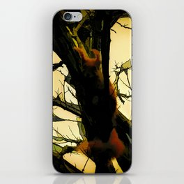 Squirrel in the tree iPhone Skin