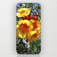 Yellow Trumpets iPhone & iPod Skin