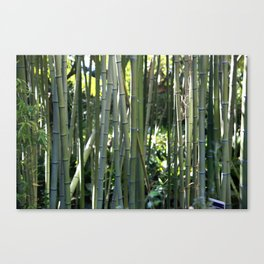 Bamboo zen calm Canvas Print