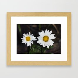 Young And Old Daisies Framed Art Print