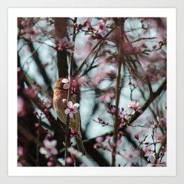 Peek-A-Boo - Spring Finch Art Print